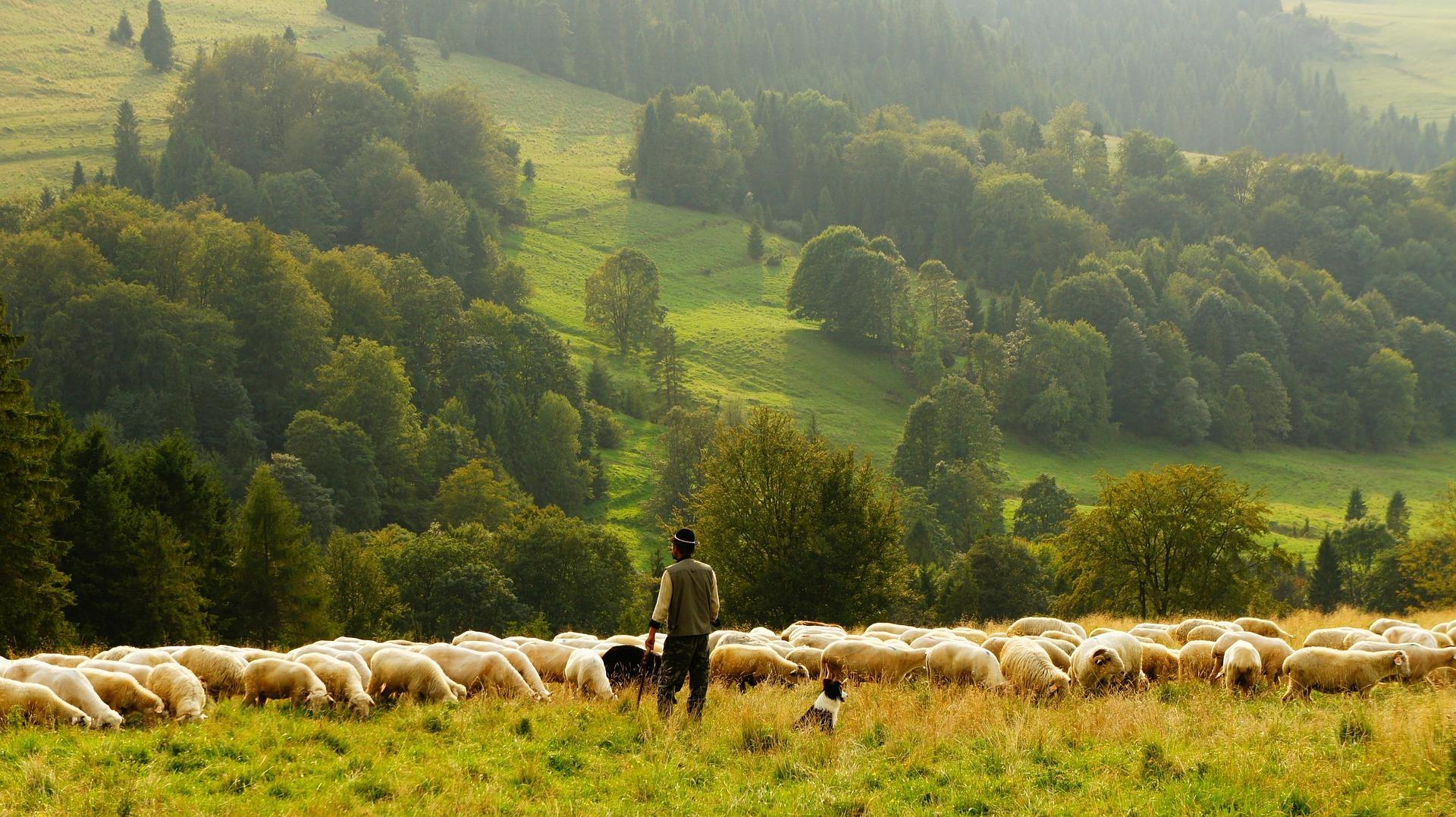 Powołani do dobra, jak Pasterz – IV Niedziela Wielkanocna